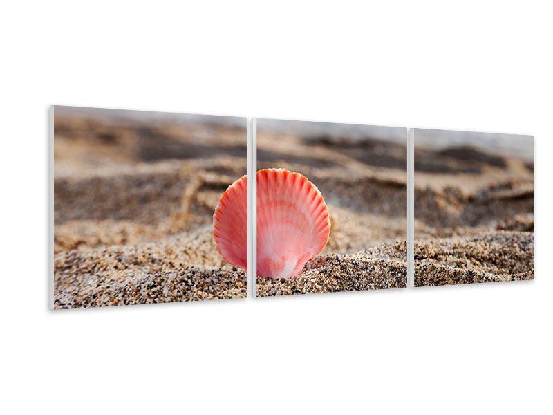 Panorama Hartschaumbild 3-teilig Die Muschel