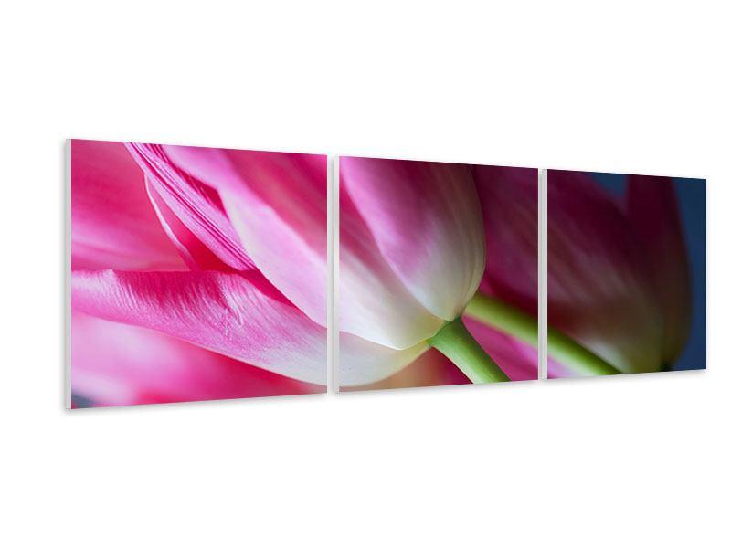 Panorama Hartschaumbild 3-teilig Makro Tulpen