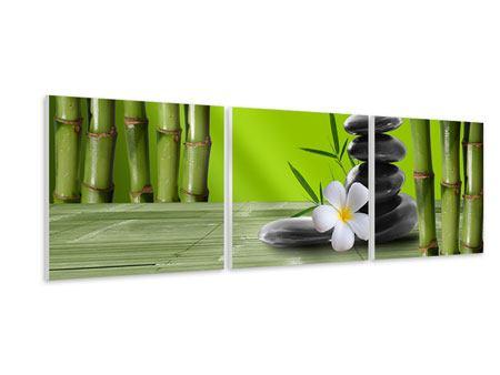 Panorama Hartschaumbild 3-teilig Der Bambus