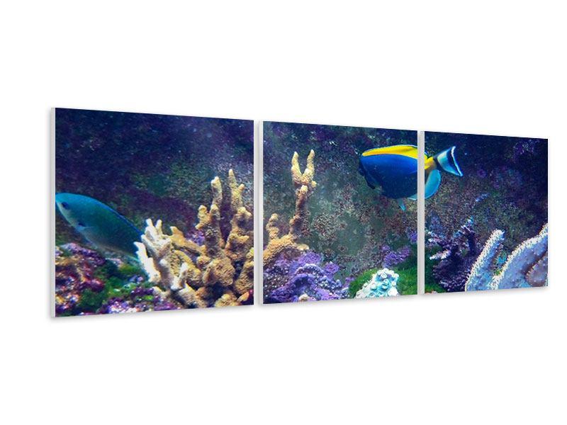 Panorama Hartschaumbild 3-teilig Fische