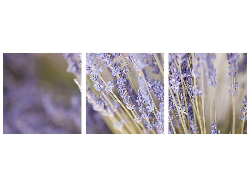 Panorama Hartschaumbild 3-teilig Lavendel XXL