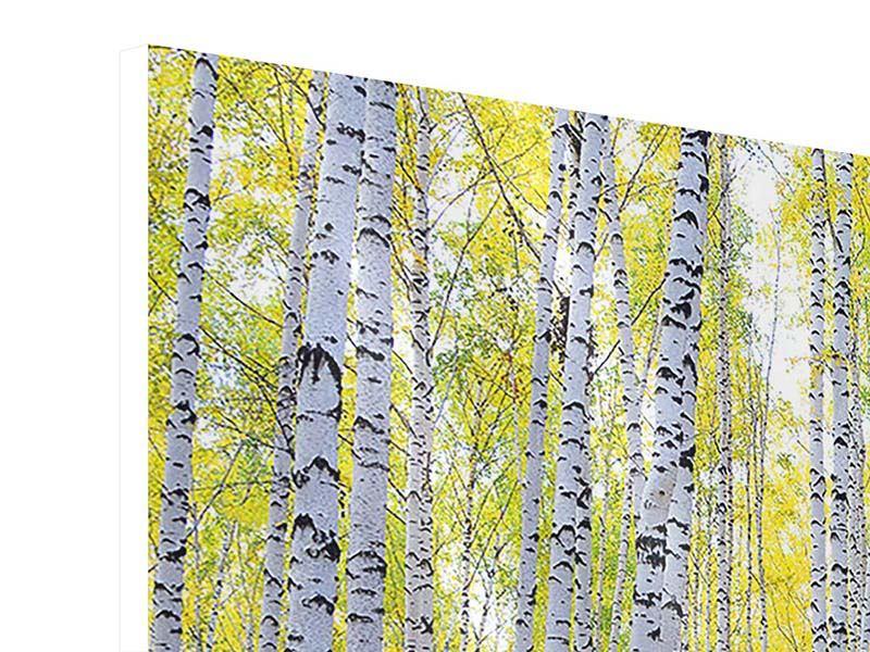Panorama Hartschaumbild 3-teilig Herbstlicher Birkenwald