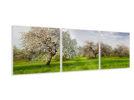 Panorama Hartschaumbild 3-teilig Apfelbaum-Garten