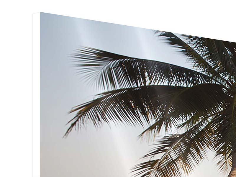 Panorama Hartschaumbild 3-teilig Palme