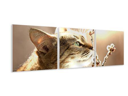 Panorama Hartschaumbild 3-teilig Die Katze