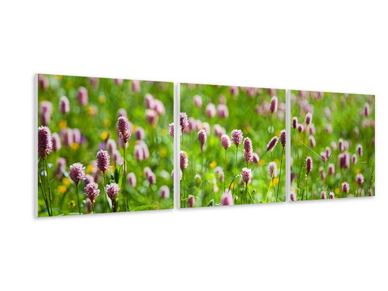 Panorama Hartschaumbild 3-teilig Der Wiesenklee