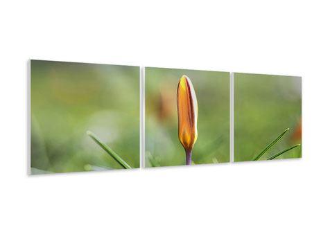 Panorama Hartschaumbild 3-teilig Die Blütenknospe