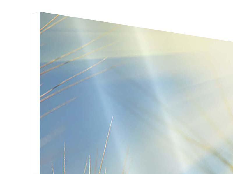 Panorama Hartschaumbild 3-teilig König des Getreides