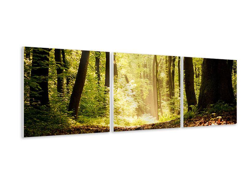 Panorama Hartschaumbild 3-teilig Sonnenaufgang im Wald