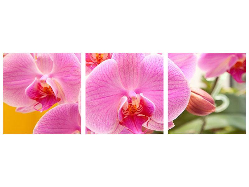 Panorama Hartschaumbild 3-teilig Königliche Orchideen