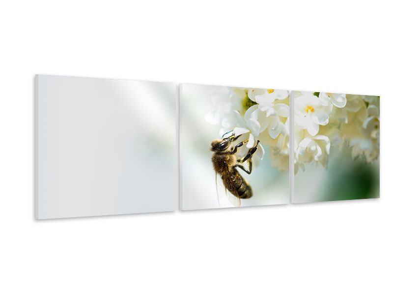 Panorama Hartschaumbild 3-teilig Die Hummel und die Blüte