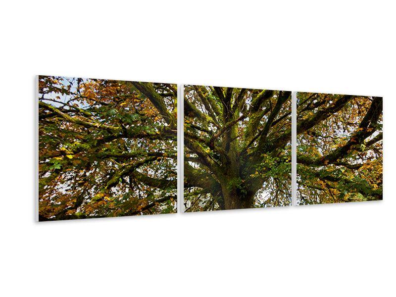 Panorama Hartschaumbild 3-teilig Mein Lieblingsbaum