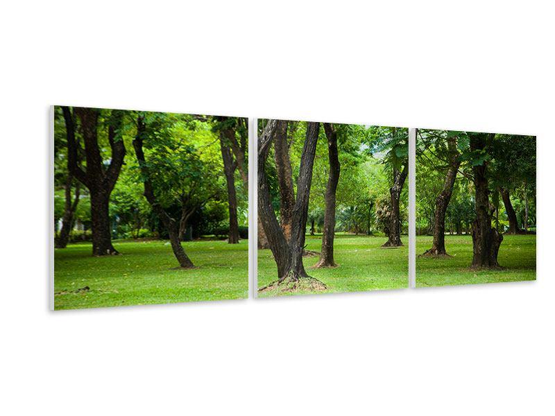 Panorama Hartschaumbild 3-teilig Kirschbaum-Garten