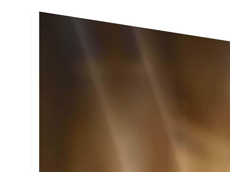 Panorama Hartschaumbild 3-teilig Wellness-Steine