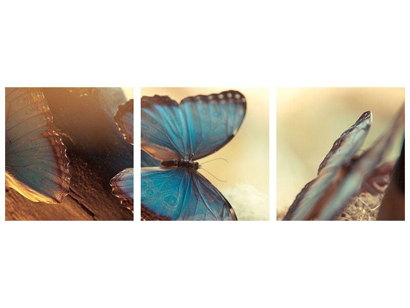 Panorama Hartschaumbild 3-teilig Schmetterlinge