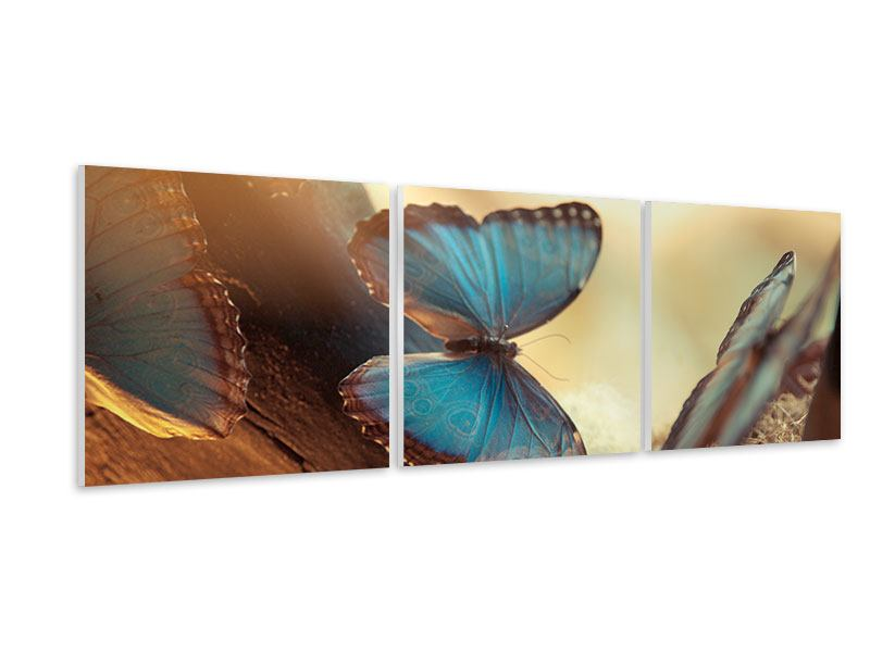 Panoramic 3 Piece Forex Print Butterflies
