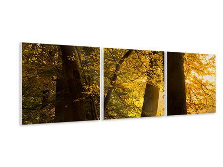 Panorama Hartschaumbild 3-teilig Herbstlaub