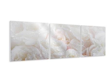 Panorama Hartschaumbild 3-teilig Weisse Rosen im Morgentau