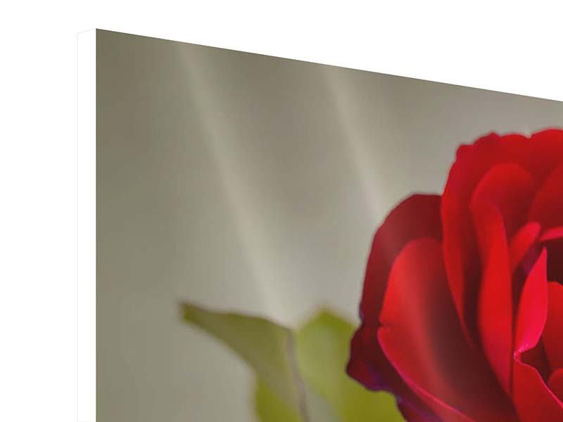 Panorama Hartschaumbild 3-teilig Drei rote Rosen