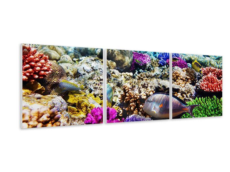 Panorama Hartschaumbild 3-teilig Fischaquarium