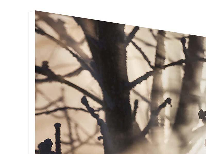 Panorama Hartschaumbild 3-teilig Äste im Schleierlicht