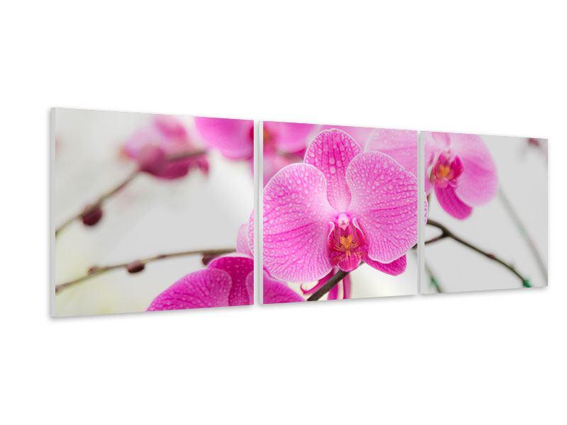 Panorama Hartschaumbild 3-teilig Das Symbol der Orchidee