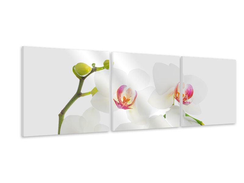 Panorama Hartschaumbild 3-teilig Orchideenliebe