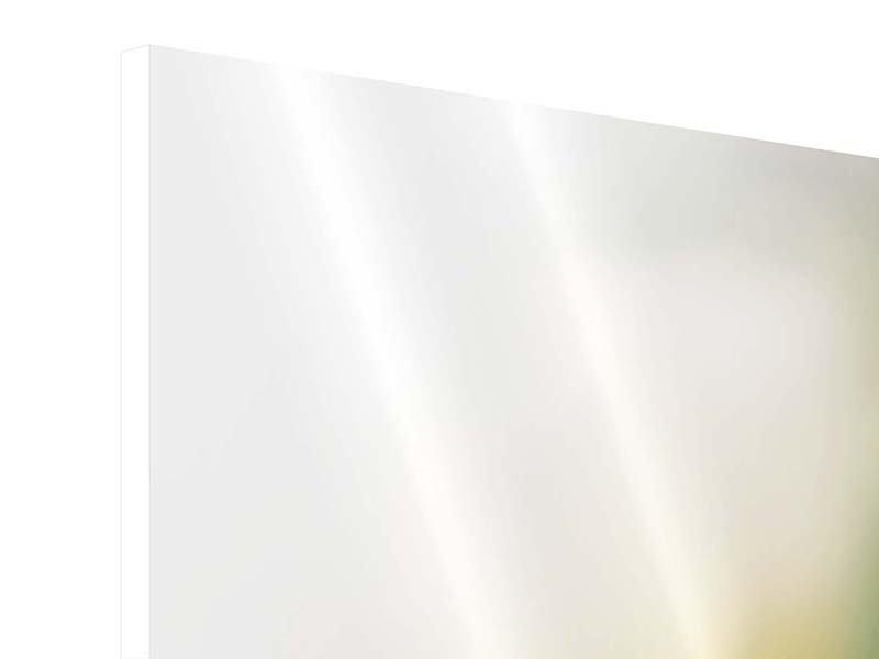 Panorama Hartschaumbild 3-teilig Tulpenperspektive