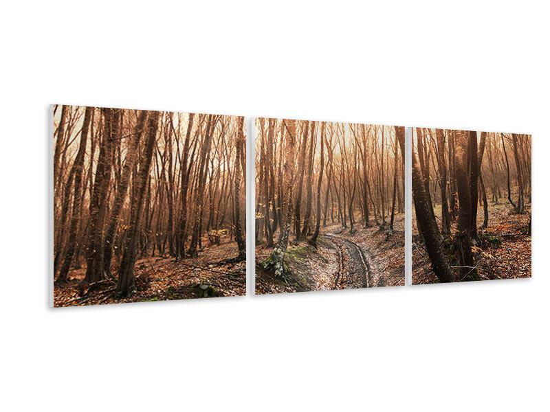 Panorama Hartschaumbild 3-teilig Der kahle Wald
