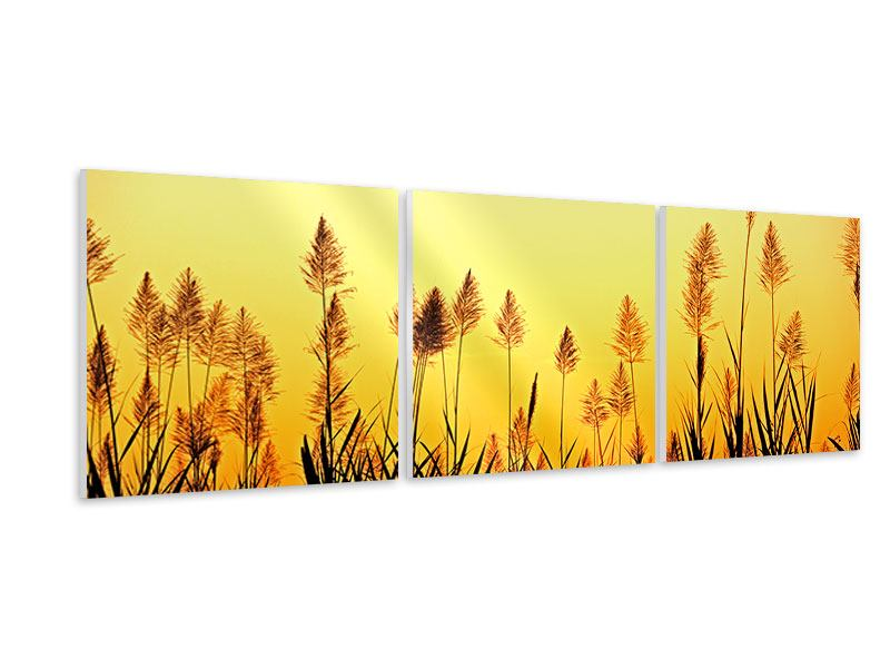 Panorama Hartschaumbild 3-teilig Die Blumen des Feldes