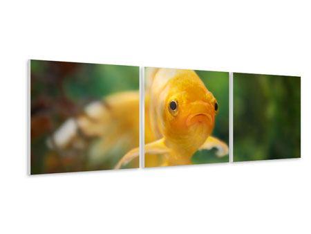 Panorama Hartschaumbild 3-teilig Der Fisch