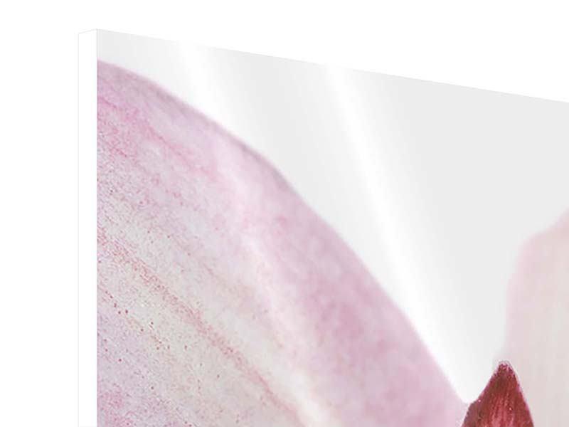 Panorama Hartschaumbild 3-teilig Orchideenblüte XXL