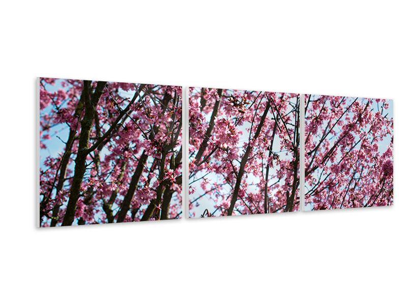Panorama Hartschaumbild 3-teilig Japanische Blütenkirsche