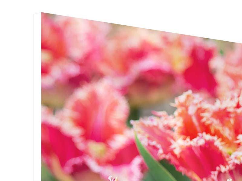 Panorama Hartschaumbild 3-teilig Die Tulpenwiese