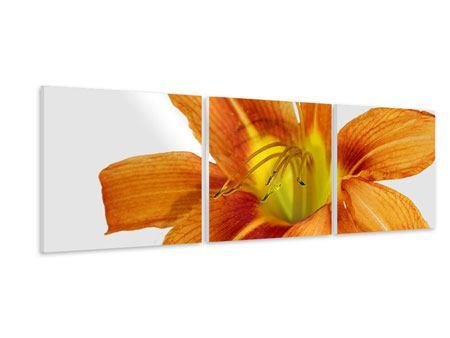 Panorama Hartschaumbild 3-teilig Die Tiger-Lilie