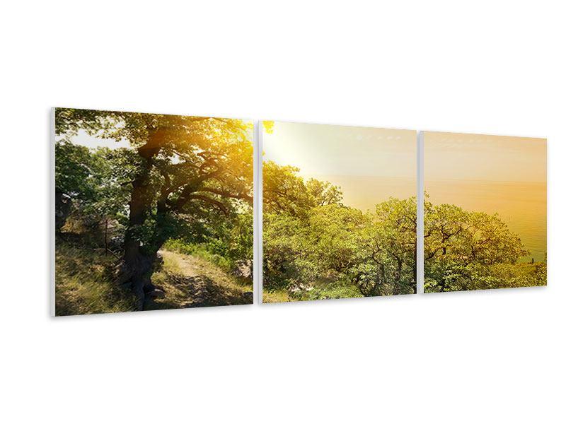 Panorama Hartschaumbild 3-teilig Sonnenuntergang in der Natur