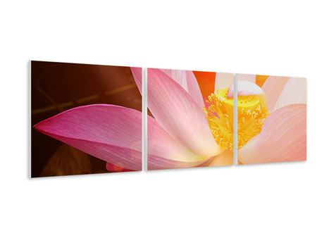 Panorama Hartschaumbild 3-teilig Close Up Lotus