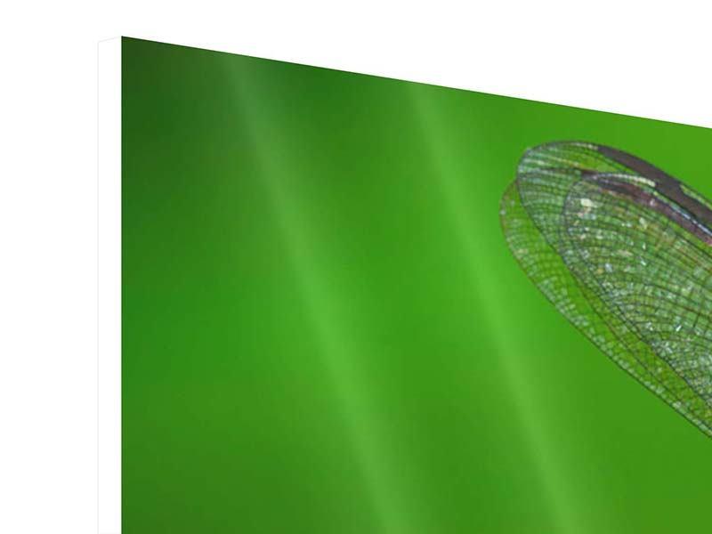 Panorama Hartschaumbild 3-teilig Die Libelle