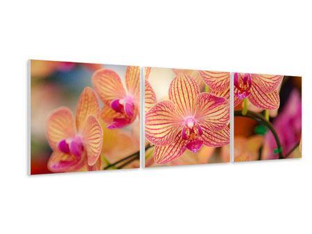 Panorama Hartschaumbild 3-teilig Exotische Orchideen