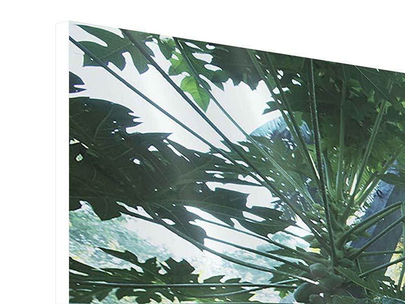 Panorama Hartschaumbild 3-teilig Dschungelstar