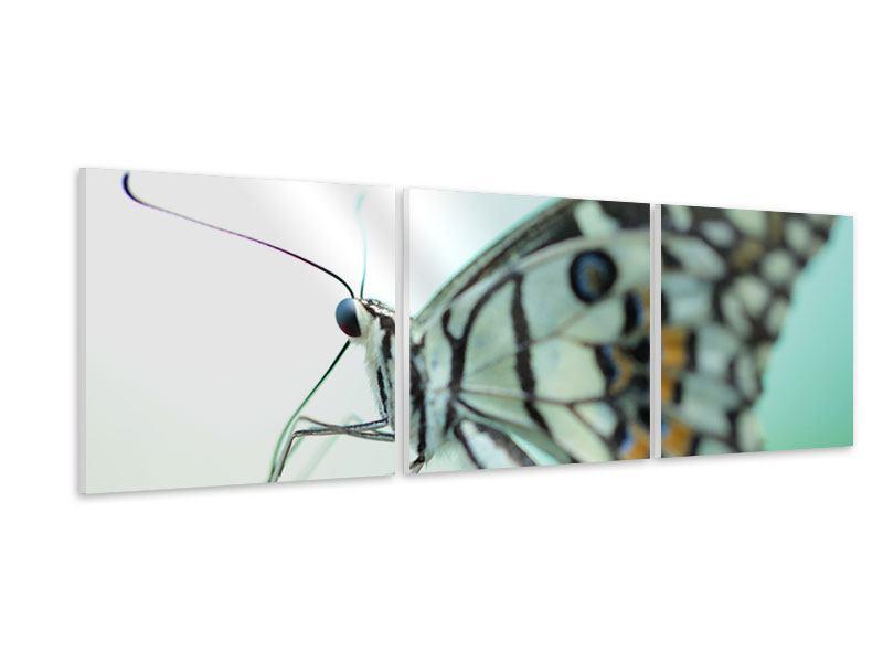 Panorama Hartschaumbild 3-teilig Schmetterling XXL