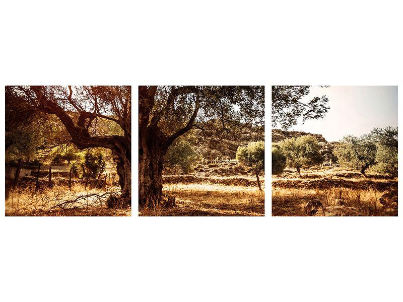 Panorama Hartschaumbild 3-teilig Olivenhain