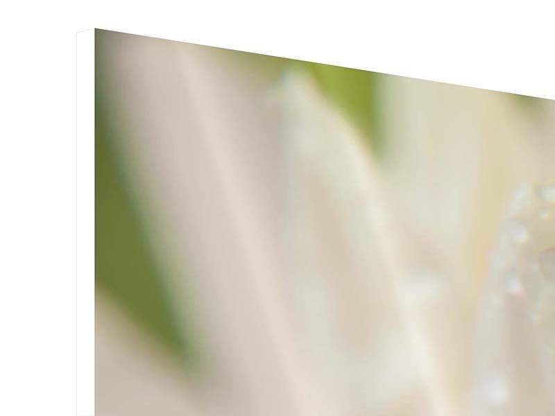 Panorama Hartschaumbild 3-teilig Close Up Seerose