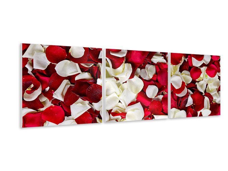 Panorama Hartschaumbild 3-teilig Rosenblätter