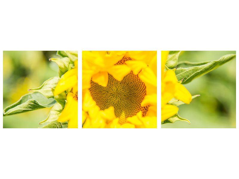 Panorama Hartschaumbild 3-teilig Wilde Sonnenblume