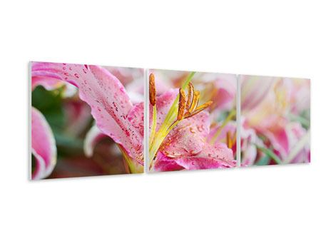 Panorama Hartschaumbild 3-teilig Lilien im Tau