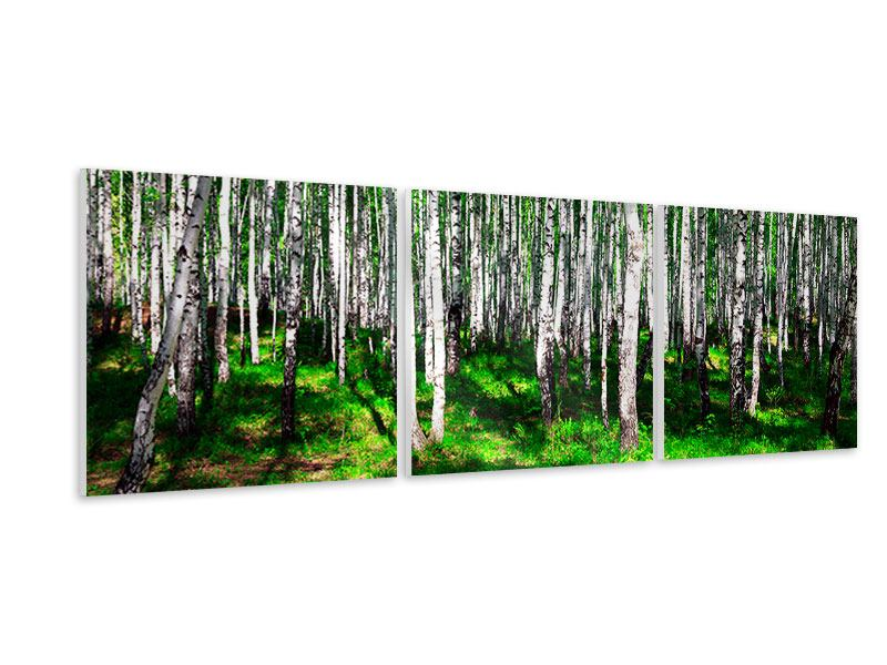 Panorama Hartschaumbild 3-teilig Sommerlicher Birkenwald