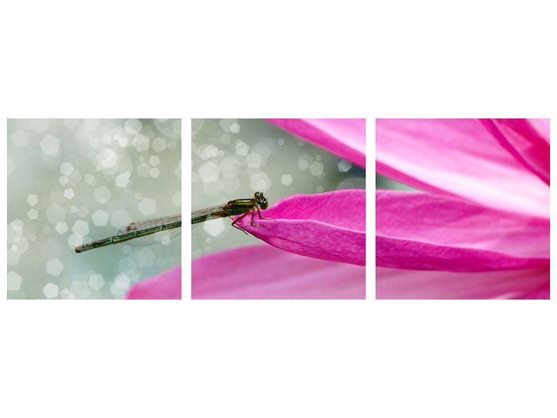Panorama Hartschaumbild 3-teilig Libelle auf dem Seerosenblatt