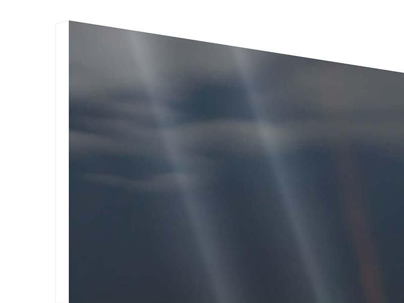 Panorama Hartschaumbild 3-teilig Seerose in der Abenddämmerung