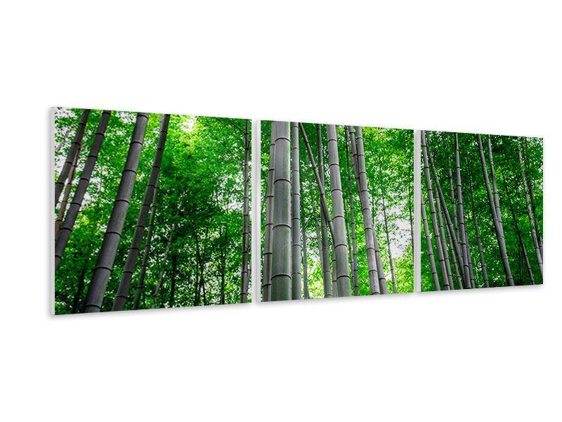 Panorama Hartschaumbild 3-teilig Bambuswald